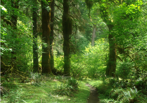 FSC Forest